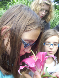 A girl smells a lily while two other girls look on.
